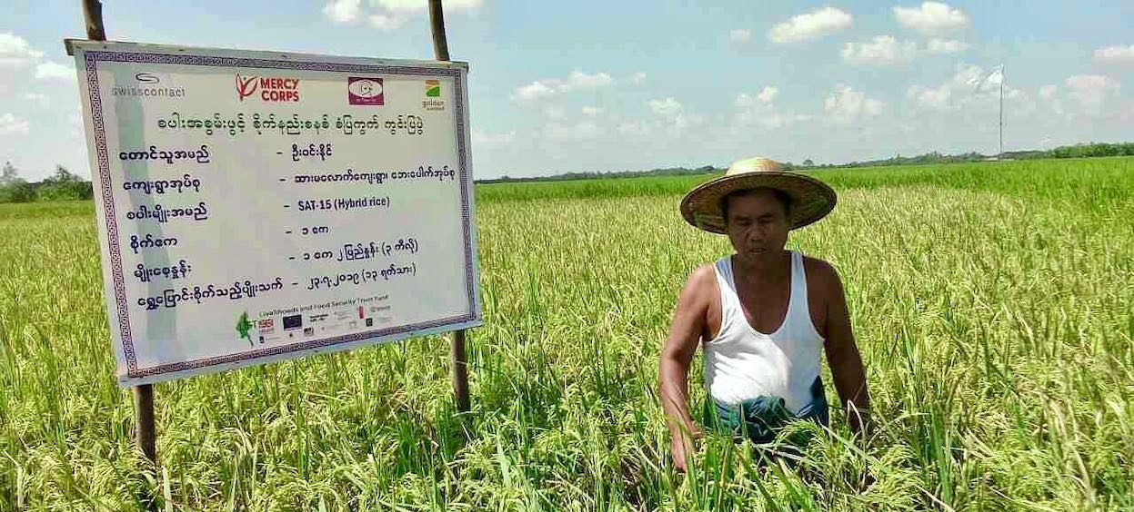 A partner-farmer of Golden Sunland, a Singapore-based company, is pictured here from the Sar Ma Lauk Village, Labutta, Myanmar. (Photo: Golden Sunland, Facebook)